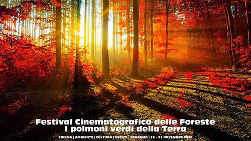 Le foreste - i polmoni verdi della terra